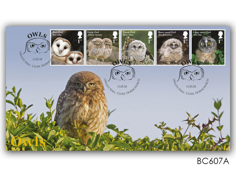 Celebrating British Owls - Little Owl
